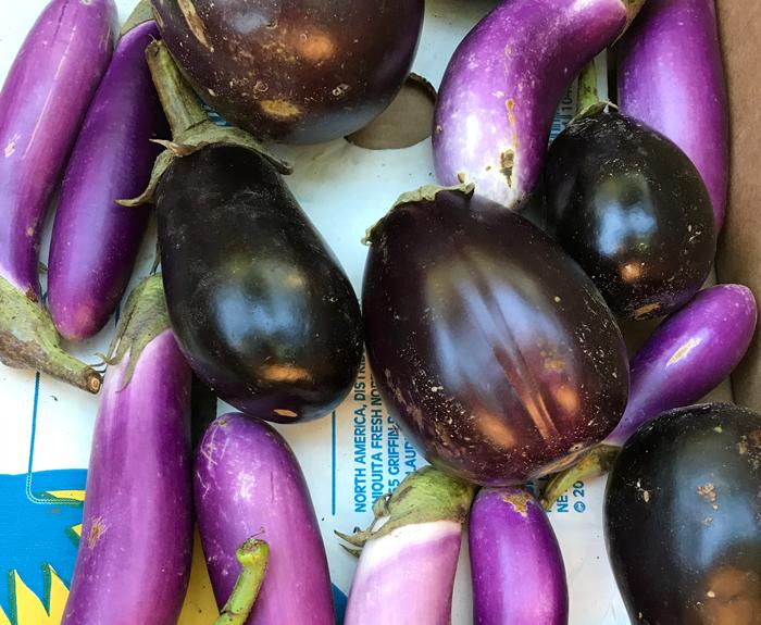 Box of eggplant